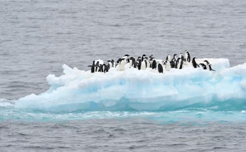 at sea, 06/12/2013; Marsel van Oosten