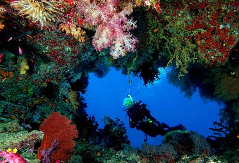 Korálové útesy na Alphonse Island
