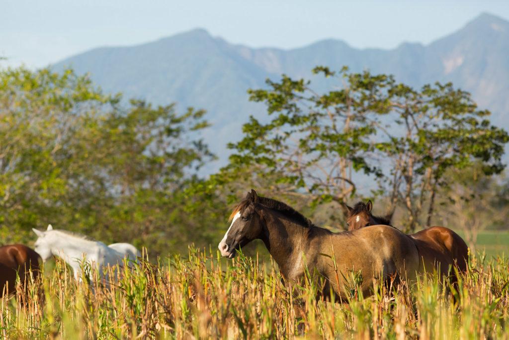 Nekupe, Nikaragua: pro milovníky koní