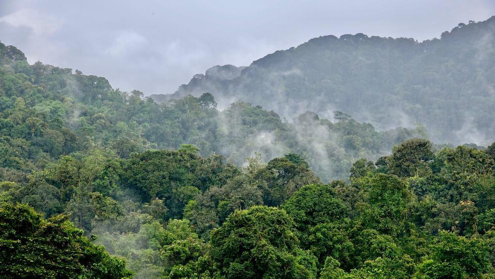 Rwanda, národní park Nyungwe