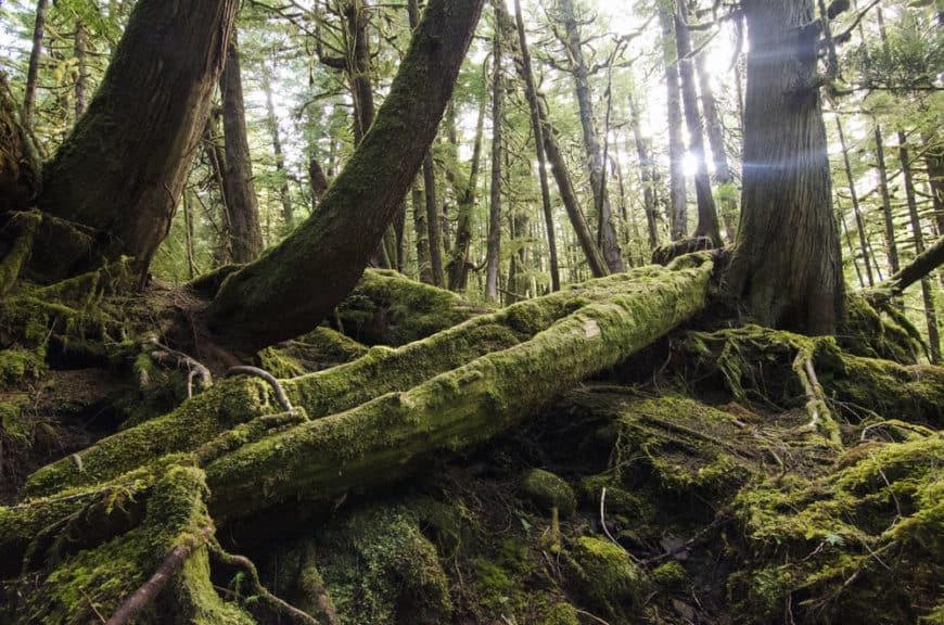 Ocean House, Haida Gwaii, Kanada: mystické lesy