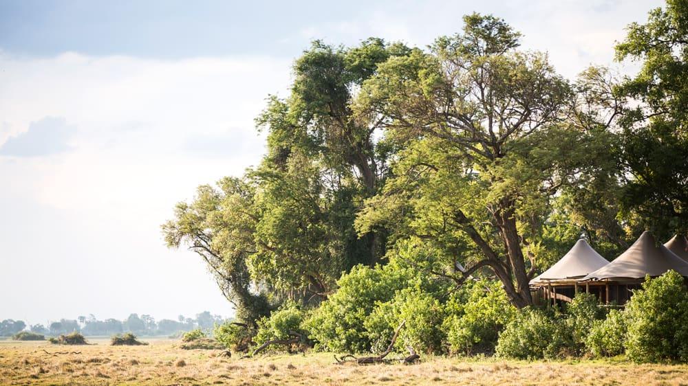 Little Mombo, Botswana: menší tábor, větší míra soukromí