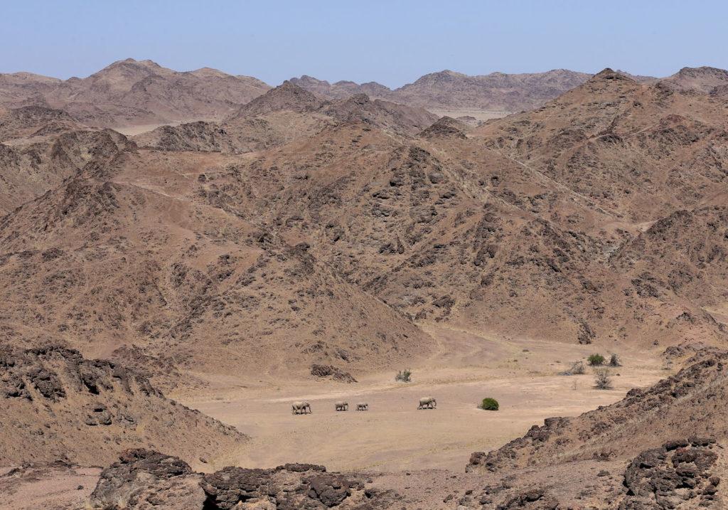 Hoanib Valley, Namibie: pouštní sloni